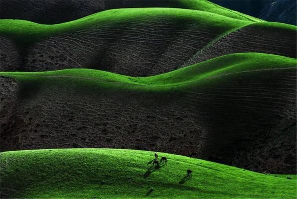 【2020年6月13日】新疆伊犁薰衣草10日深度摄影采风