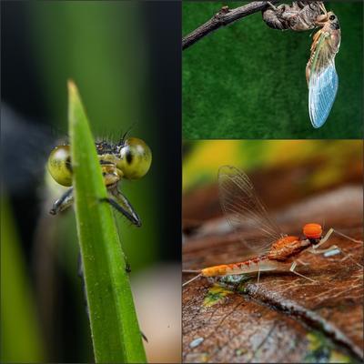 6月12日浙北大峡谷生态微距自驾拍摄活动