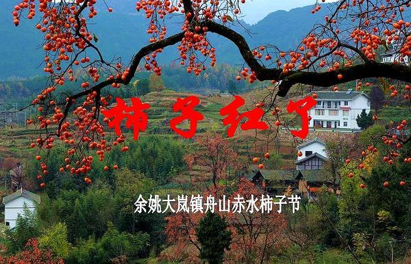 10月30日浙江余姚舟山赤水四明湖水杉柿子节3日自驾采风
