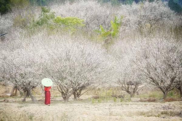 云浮梅花古风环境人像主题拍摄活动