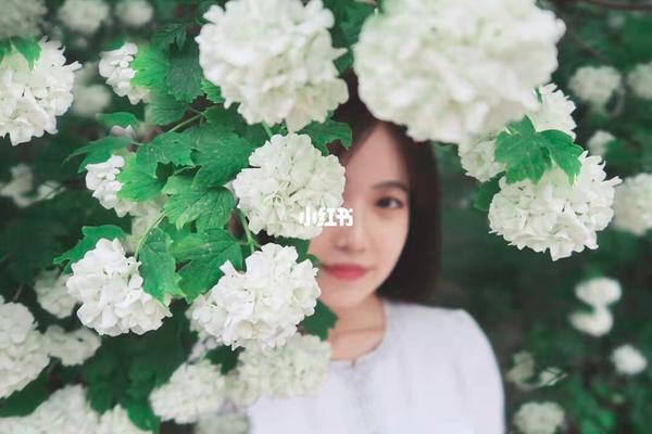 5月9日周日绣球花人像拍摄活动